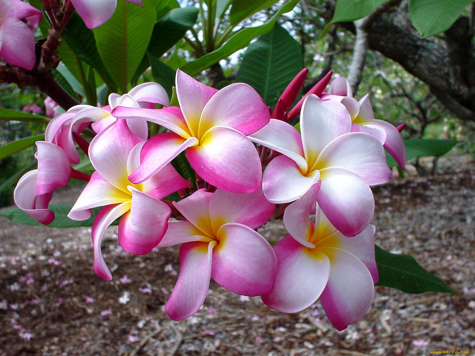 думают, что все цветы мира фото и названия того, что здесь